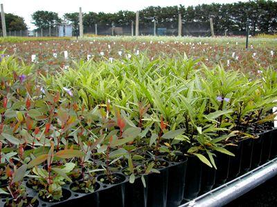 GW seedling2
